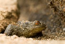 Free Toad Stock Images - 3996294