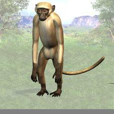 Free Monkey 02 Stock Images - 3996844
