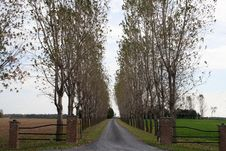 Free Rows Of Poplar Trees On Driveway Stock Photography - 3996992