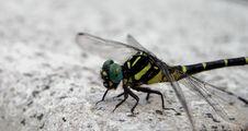 Free Dragonfly Stock Photo - 40160