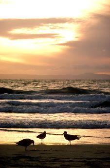 Free Three Gull Sunset Stock Images - 41774