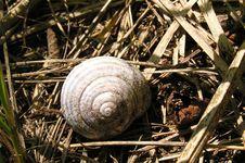 Free Rusty Snail Shell Royalty Free Stock Photos - 42068