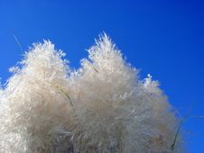 Free Pampas And The Sky Stock Photo - 43220