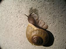 Free Slow Moving Snail Stock Photos - 48253