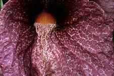 Free Strange Plant Texture Stock Image - 49981