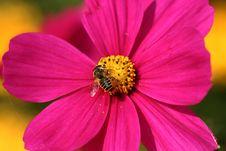 Free I Love Honey! Royalty Free Stock Image - 405606