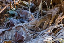 Free Leaves In The Frost Royalty Free Stock Photo - 405705