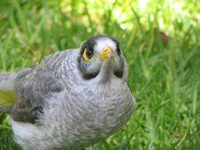 Free Little Bird Royalty Free Stock Photography - 405717
