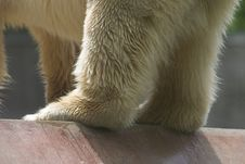 Free Ice Bear Detail Stock Images - 405834