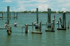 Free Pelicans Finding Their Place Royalty Free Stock Photography - 407867