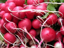 Free Radishes Stock Photography - 409282