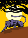 Free Black Panther On The Prowl Royalty Free Stock Photos - 4006058
