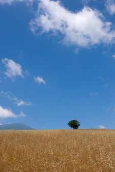 Free Field Of Oats Stock Photography - 4000312
