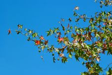 Free Leafs In The Sky Stock Photo - 4002090