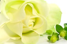Free Yellow Rose And Decorations Royalty Free Stock Image - 4003226