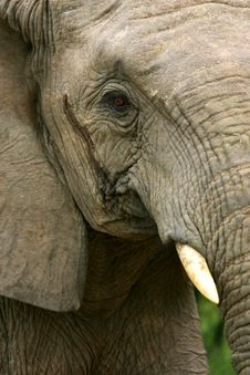 Free African Elephants Stock Image - 4003661