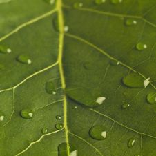 Free Leaf With Drops Of Water Stock Photos - 4003743