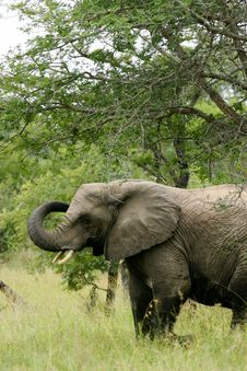 Free African Elephants Stock Photo - 4003810