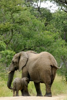 Free African Elephants Royalty Free Stock Images - 4003829