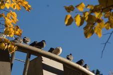 Free Late Autumn View Stock Photography - 4005502