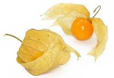 Free Physalis Stock Photography - 4005602