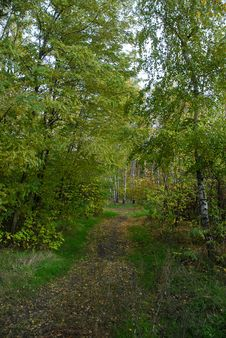 Free Autumn Colourful Forest Stock Photography - 4005622