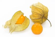Free Physalis Stock Images - 4005644