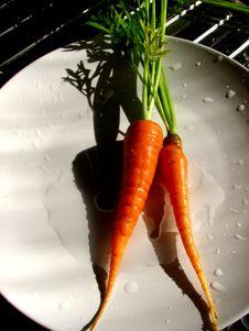 Free Carrots Royalty Free Stock Photography - 4005937