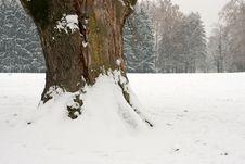 Free Tree Under Snow Stock Image - 4007281