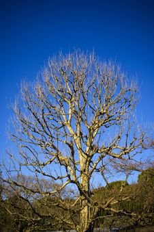 Free Leafless Tree Stock Photos - 4008533
