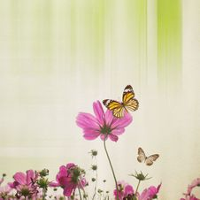 Free Cosmos Flower With Paper Background Royalty Free Stock Photography - 40001617