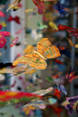 Free Butterfly Mobiles Stock Photography - 4012882
