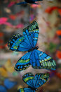Free Butterfly Mobiles Stock Photography - 4013012