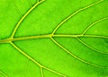 Free Leaf Of A Plant On Light With A Deciduous Ornament Royalty Free Stock Photography - 4016057