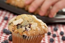Free Fresh Blueberry Muffins Stock Photography - 4010532
