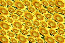 Free Sunflower Royalty Free Stock Image - 4012446