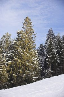 Free Ski Resort In Soell - Forest Royalty Free Stock Photos - 4013048