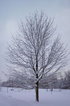 Free Tree Covered In Snow Royalty Free Stock Images - 4013059