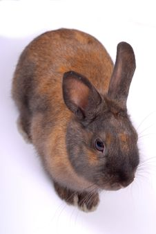 Free Rabbit Royalty Free Stock Photography - 4013227