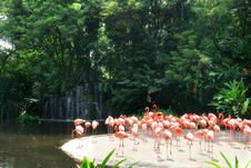 Free Red Flamingos Stock Images - 4013524