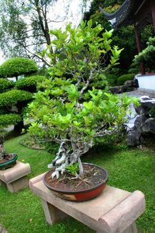 Free Bonsai Stock Photos - 4013563