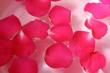Free Rose Petal Stock Image - 4013581