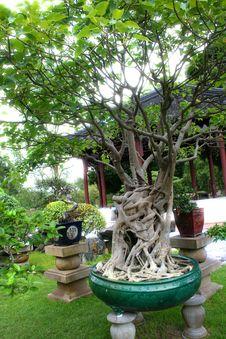 Free Bonsai Stock Photo - 4013910