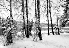 Free Winter Forest Royalty Free Stock Image - 4014346