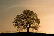 Free Lonely Tree Royalty Free Stock Photography - 4014357