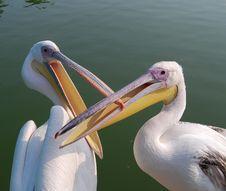 Free Bird Pelican Stock Images - 4015084