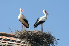 Free Stork Nest Royalty Free Stock Image - 4016786