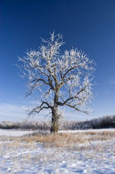 Free Hoarfrost Royalty Free Stock Image - 4017756