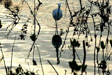 Free Egret Bird Stock Photos - 4018783