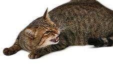Free Hazardous Cat Stock Image - 4019601